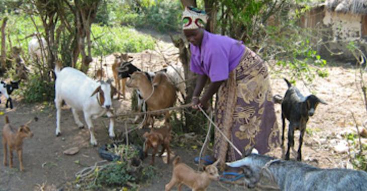 Fill 730x380 original goat