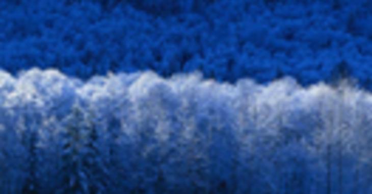 Fill 730x380 profile thumb winter
