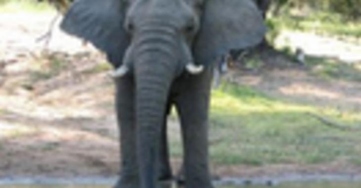 Fill 730x380 profile thumb afrikanische elefanten