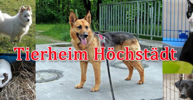 Fill 730x380 tierheim hoechstadt
