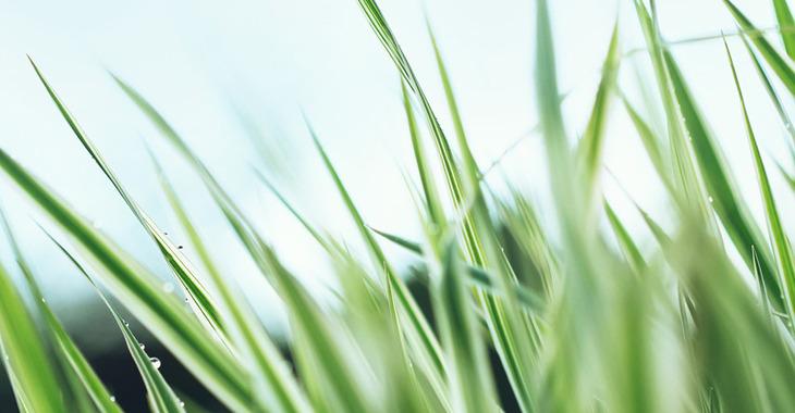 Fill 730x380 1440 second grass by zim2687