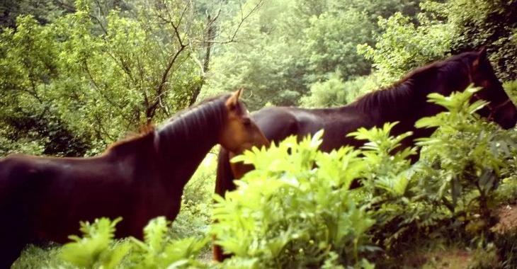 Fill 730x380 pferde wald caggio