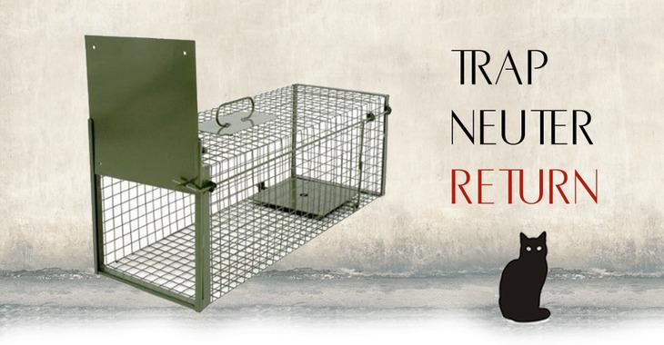 Fill 730x380 trap