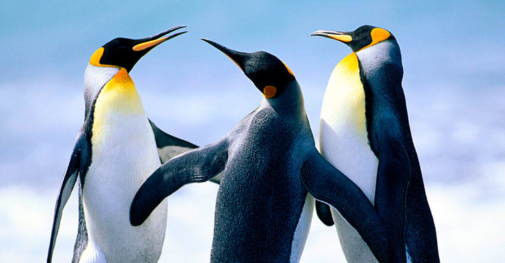 Fill 730x380 penguins