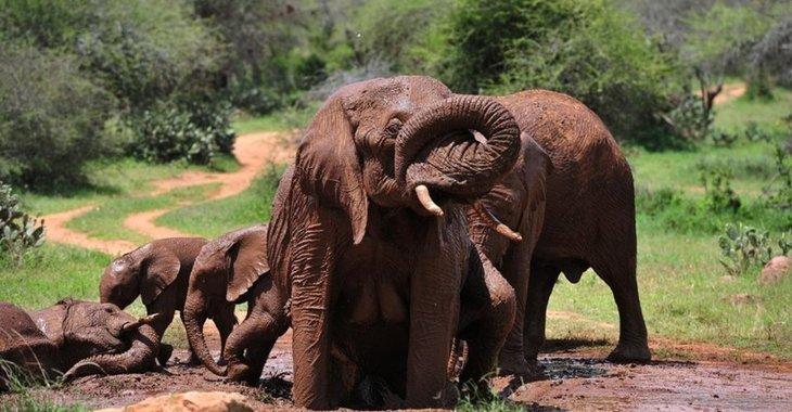 Fill 730x380 bp1482062304 afrikanische elefanten ausrottung