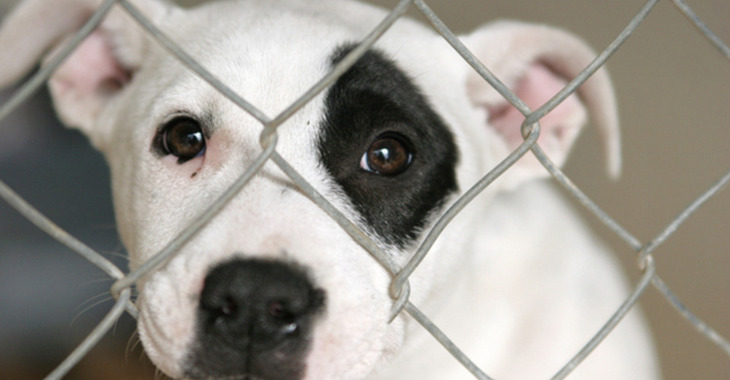 Fill 730x380 bp1499804683 20130204 picking a shelter puppy 3