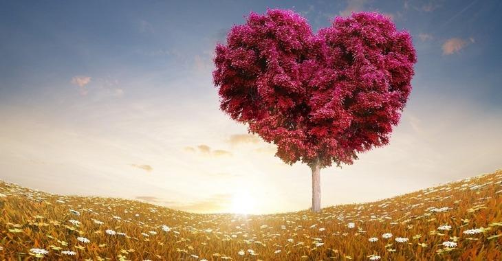 Fill 730x380 bp1528464866  downloadfiles wallpapers 3840 2160 love heart tree fields 13391