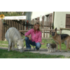 Tierhilfe Ibiza e.V. - Auffangstation/Gnadenhof