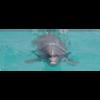 Delfinbotschaft gUG