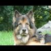 SOS-Schäferhundhilfe e. V.