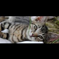 Fill 200x200 profile thumb katzensternchen