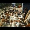 Tierhilfe-Curacanis e.V.