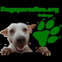 Fill 200x200 logodogsparadise