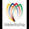 Welwitschia - Bildungsinitiative für Namibia e.V.