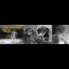 the homeless dogs - die heimatlosen Hunde