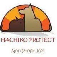 Fill 200x200 logo hachiko