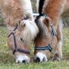 Mensch & Pferd integrativer Reiterhof e.V.
