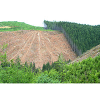 Fill 200x200 bp1483356761 kahlschlagfla che wald forest