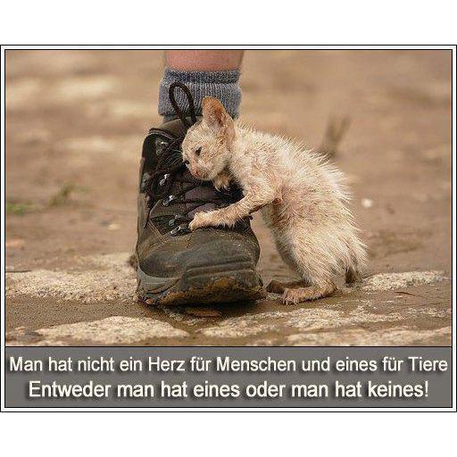 So Wollen Wir Wohnen Bw: Tierschutz Bad Oldesloe E.V. : Spende Für Unsere