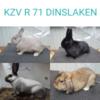 """Kaninchenzuchtverein """"R 71"""" Dinslaken"""